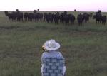 トランペットの演奏を聴きに牛が集まってくる映像