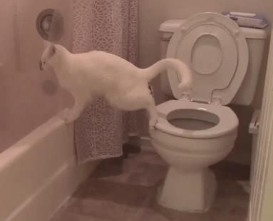 トイレで不味いミスをしてしまったネコ