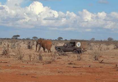 ゾウの親子、感動の再会