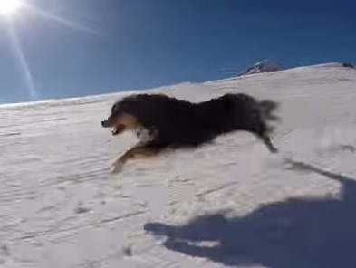 スキーヤーの飼い主と一緒にゲレンデを疾走するワンコ