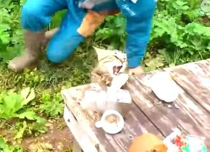釣った魚をネコに奪われた!