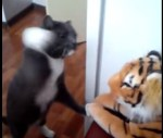 トラのぬいぐるみに猫パンチを連打するニャンコ