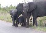 自分の鼻が気に入らない象の赤ちゃん