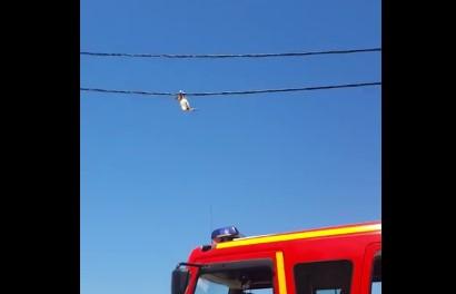 ニャンコが電線で綱渡りするも大ピンチ!