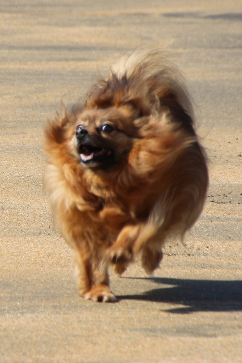 Large Of How Fast Can A Dog Run