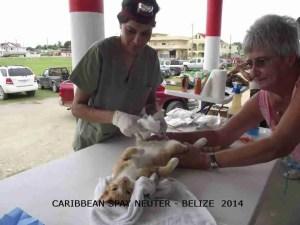 (Caribbean Spay-Neuter photo)