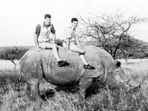 Toni Harthoorn, left, and Ian Player sit astride a semi-immobilised white rhino in Imfolozi game reserve during Operation Rhino in the early 1960s.