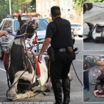 Coalition to Ban Horse-Drawn Carriages to picket NYC mayor de Blasio for failing to keep promise