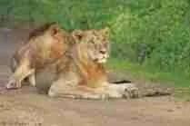 (Kenya Wildlife Service photo)