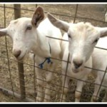 SAEN got their goats:  Santa Cruz Biotech put out of animal lab work