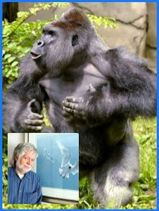 Background: Harambe. Foreground: Barry Kent Mackay.