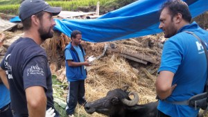 "Photograph described by G.P. ""Uttam"" Dahal as ""Mirror pose from Khageswor Sharma Bhattarai,  director of HART,  and Ben Brown,  VMD from World Veterinary Services,  discussing treatment of pregnant buffalo with backbone injury at Churetaar, Kuil, Sindhupalchowk."""