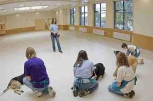 Oregon Humane Society dog training center floor still looks new. (OHS photo)