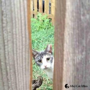 AcA peeking cat