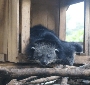Binturong oversees the ACRES subsidiary in Laos. (ACRES photo)