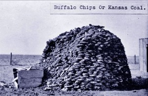 Pile of blue buffalo chips, Ellsworth County, Kansas, 19th century.