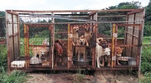 Damyang Dog Farm, photographed by Korea Animal Rights Advocates in August 2015.