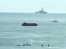 EarthJustice video clip shows psuedorcas in proximity to U.S. Navy vessels.