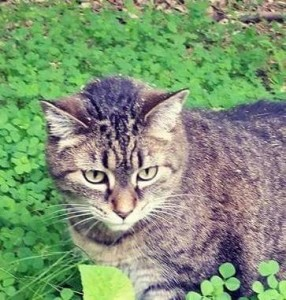 No rolling in clover for New York cats. (Faye McBride photo)