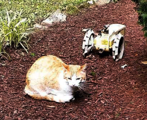 Feral cats running amok with tractors have degraded as much as 40% of the arable land in China. (Faye McBride photo)