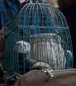 """Caged ferret in the Harry Potter film """"Deathly Hallows,  part 2."""""""