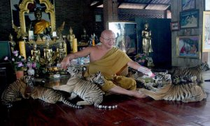 """Tiger Temple"" publicity photo"