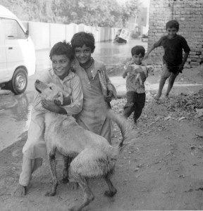 Children playing with dogs in Multan, Pakistan. (Animal Save Movement photo)