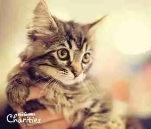 Petsmart Charities kitten