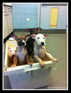 (Battersea Dogs & Cats Home photo)