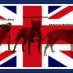 New U.K. death exemplifies pit bull advocacy chutzpah