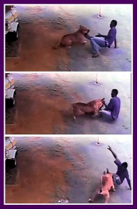 """Wayne """"Wayntjie"""" Kayster, 35, was fatally mauled by two pit bulls on March 24, 2016, in an attack captured on a security camera. Accounts differ as to whether Kayster was attempting a burglary or was merely collecting scrap metal to sell."""