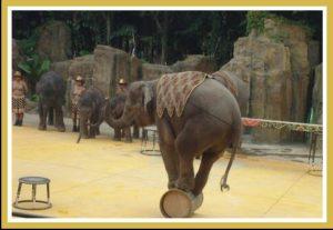 Elephant stunt at Chimelong Safari World.