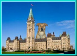 Bull mastiff/Rottweiler mix looms over Parliament Hill. (Beth Clifton collage)