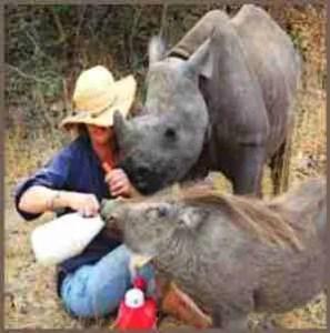 Judy Travers bottle-feeds Tatenda. (Zimbabwe Conservation Task Force photo)