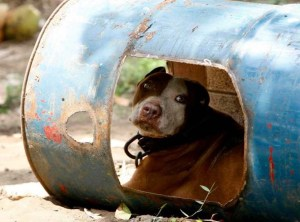 (Philippine Animal Welfare Society photo.)