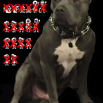 Montreal appeal of stay on pit bull ban is authorized to proceed