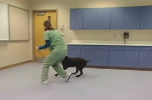 SAFER testing. (From ASPCA video.)