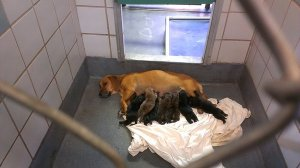 Inside the San Antonio Animal Care Services shelter.  (Facebook photo)