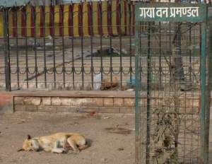 Indian Street Dogs/Facebook photo