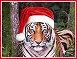 Tiger for Christmas