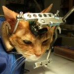 PETA claims win against cat studies at UW-Madison,  but maternal deprivation experiments continue