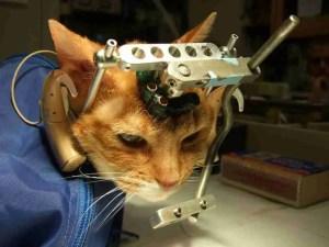 Cat from studies at UW-Madison.  (PETA photo)