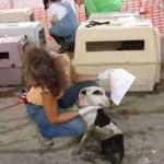 Rollover crash reignites controversy over dog rescue traffic from U.S. to Canada