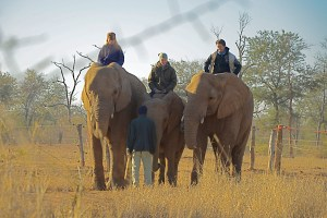 Oriane Lee Johnston,  Heather Brand,   and Theresa Warth in 2011.  (From http://www.equitrekking.com/articles/entry/Volunteer_Zimbabwe_Horse_Safari_Mavuradonha_Wilderness/)