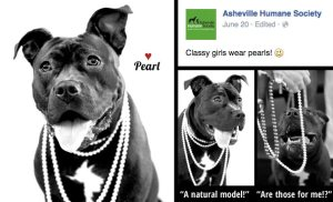 anthropomorphic-pit-bull-campaign-asheville-humane-june-2015