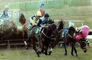 "Australian ""jumps"" racing.  (Animals Australia photo)"