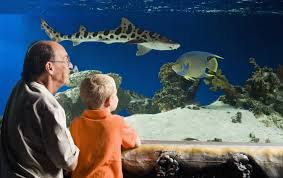"""Sleep With The Sharks"" attraction at the Austin Aquarium. (Austin Aquarium photo)"