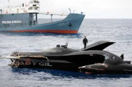 Second view of Ady Gil after ramming.  (Sea Shepherd Conservation Society photo)