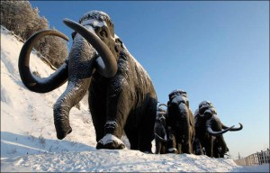 Woolly mammoths: the mightiest vegans of the last 60 million years. (Visit Khanty-Mansiysk photo)