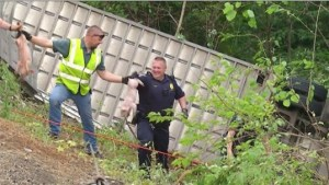 Another angle of the piglet rescue operation,  from the WDTN video.